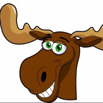 Muskoka Moose